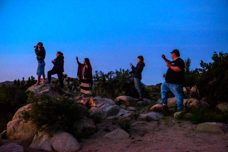 Taking Pictures at Joshua Tree