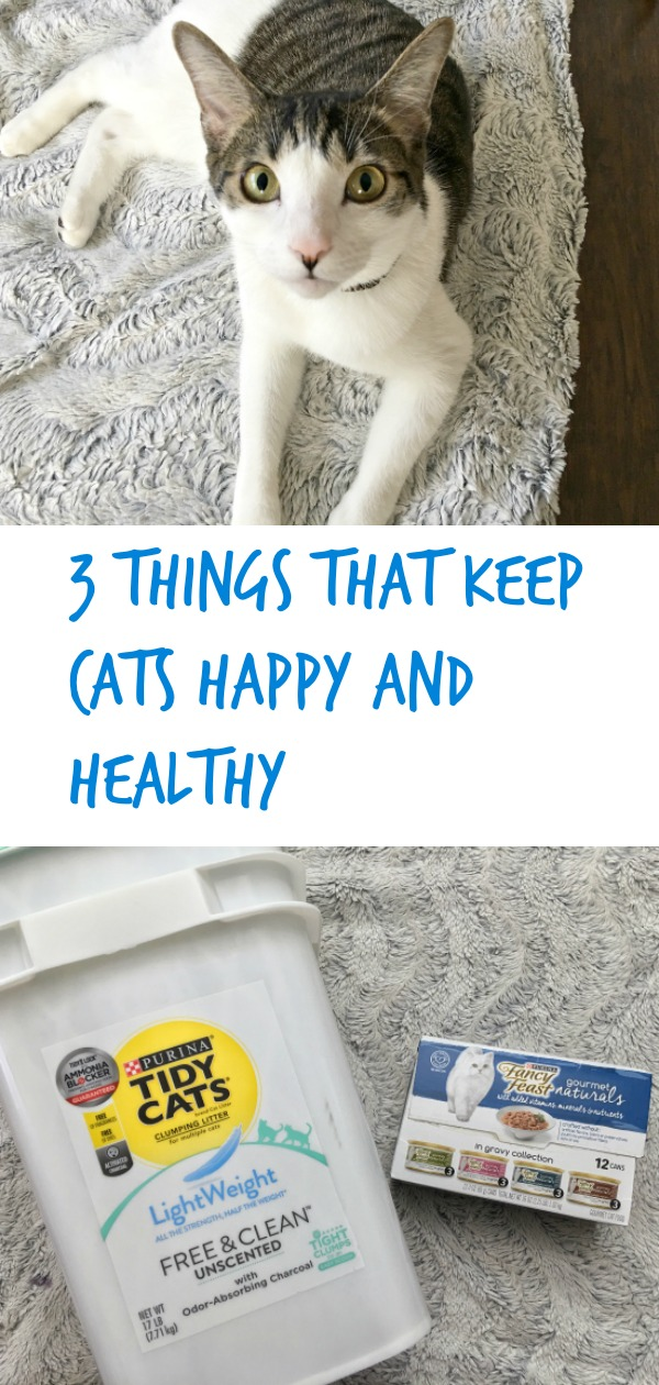 3 Things That Keep Cats Happy And Healthy