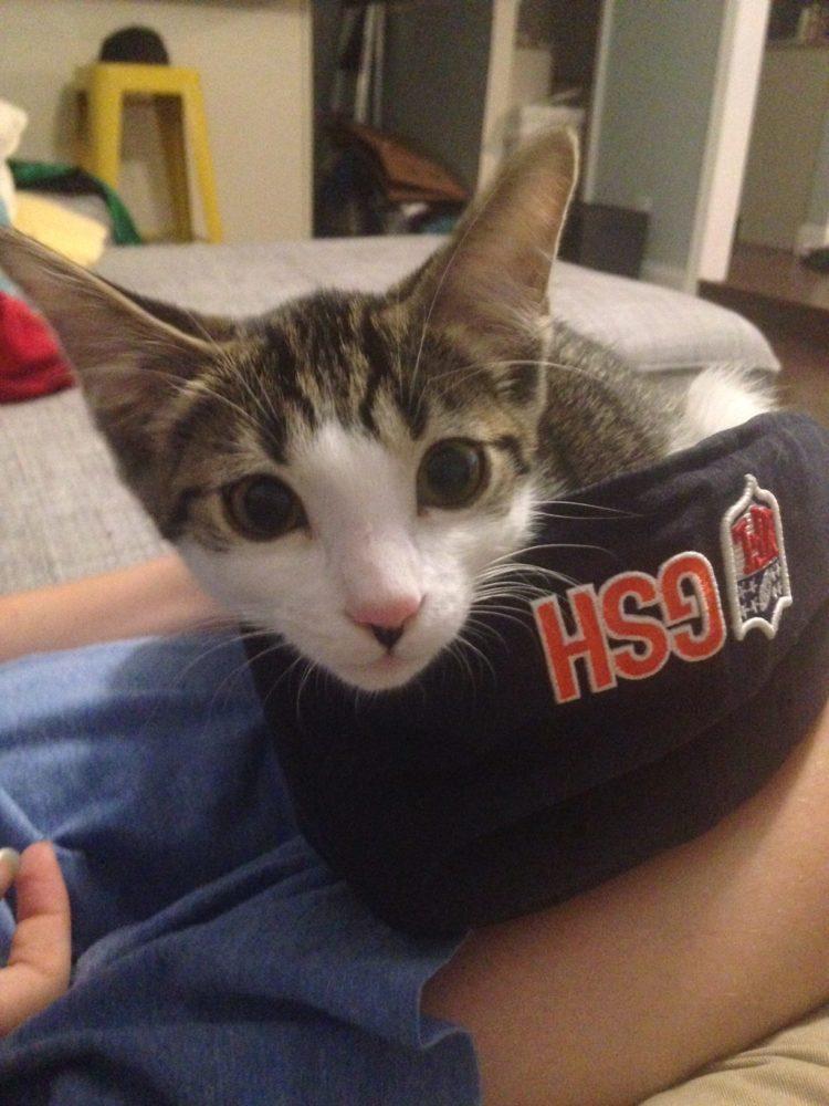 Cat's Pride Litter for Good Program
